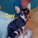 Cecy-name