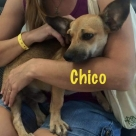 Chico-name
