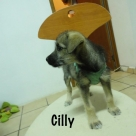 Cilly-name