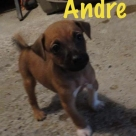 andre-name