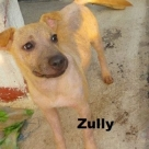 zully-name