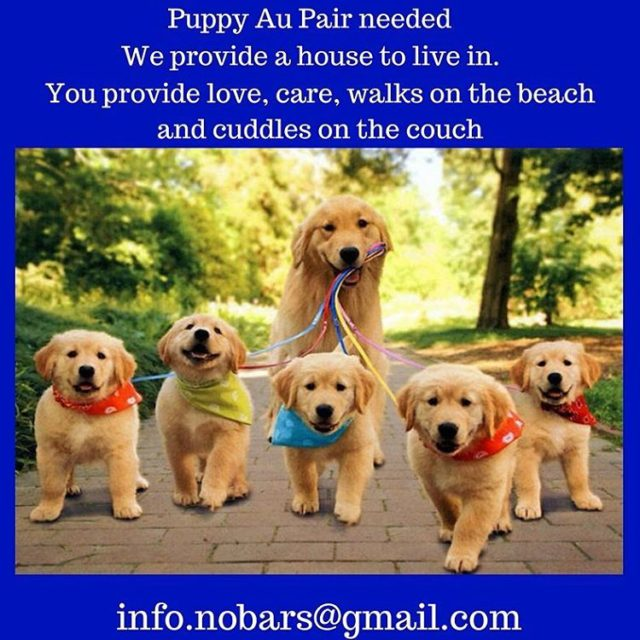 We need puppy loving people who want to help changehellip