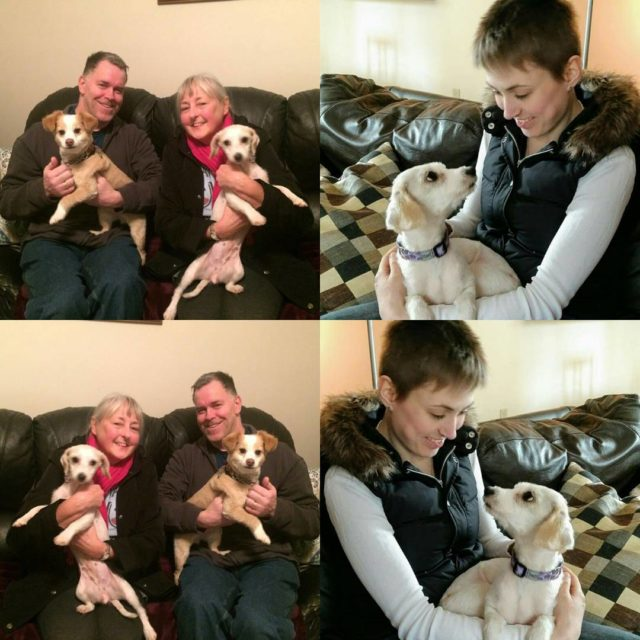 Our sweet Carey now has her forever family!! We arehellip