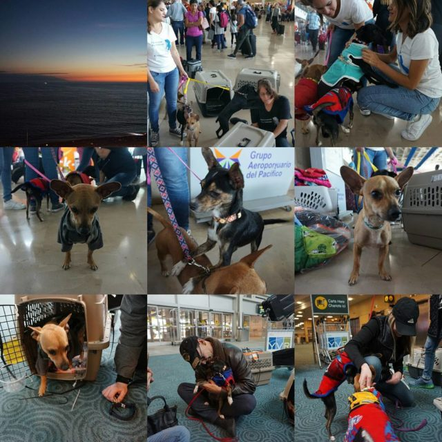 An amazing week in Puerto Vallarta came to an endhellip