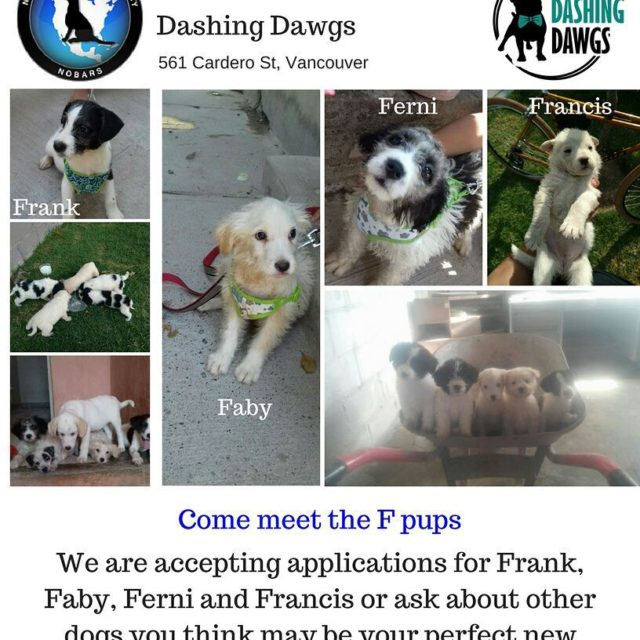 Its almost adoption event day! This Saturday at dashingdawgsvancity comehellip
