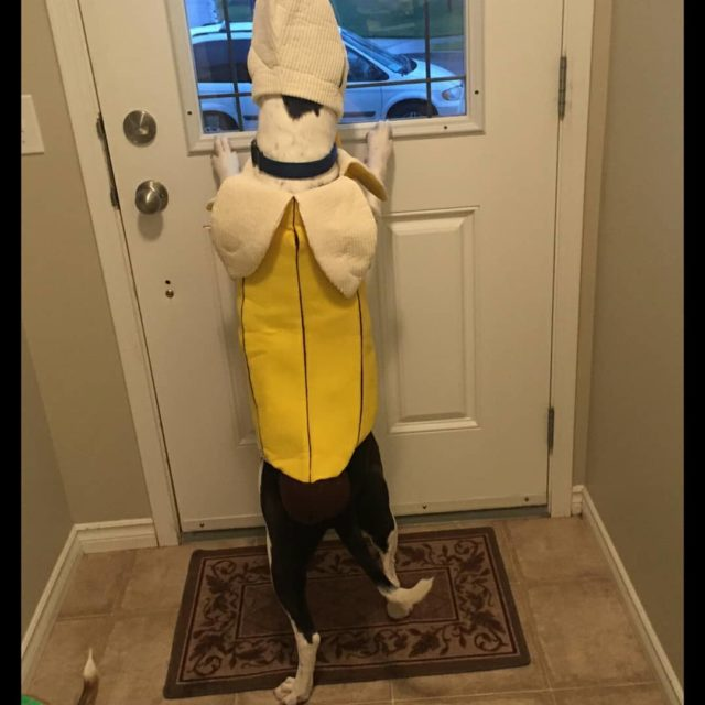 Happy Halloween from this banana its Panda and Shes waitinghellip